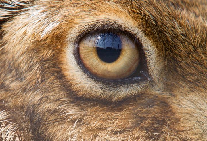 Brown Hare Eye,Berwickshire,Scottish Borders