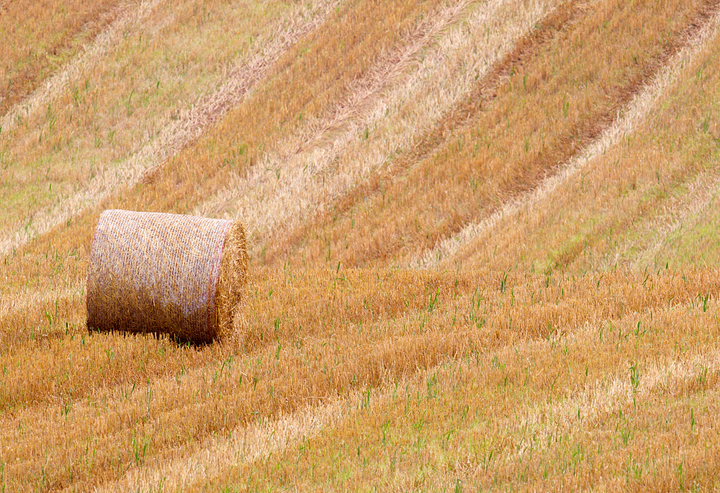 Bale with field patterns and colours,near Scotts View,Melrose in the Scottish Borders.