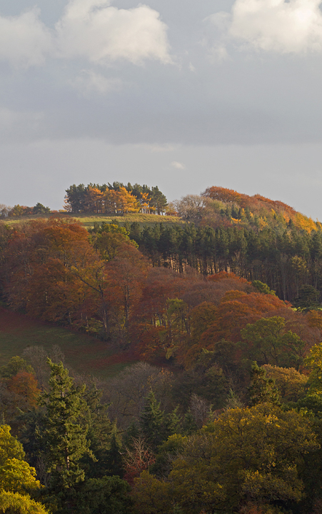 Autumnal treescape near Scotts View,Melrose in the Scottish Borders.