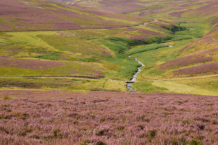 Burn running through the Lammermuir Hills.