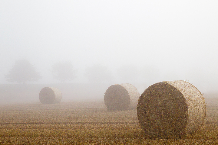 Bales through the mist in Berwickshire,Scottish Borders.
