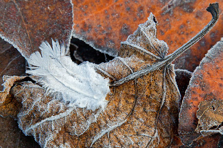 More frosty feathers and leaves.