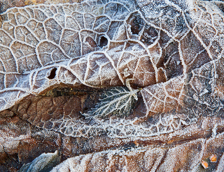 More frosted textures,patterns and shapes.